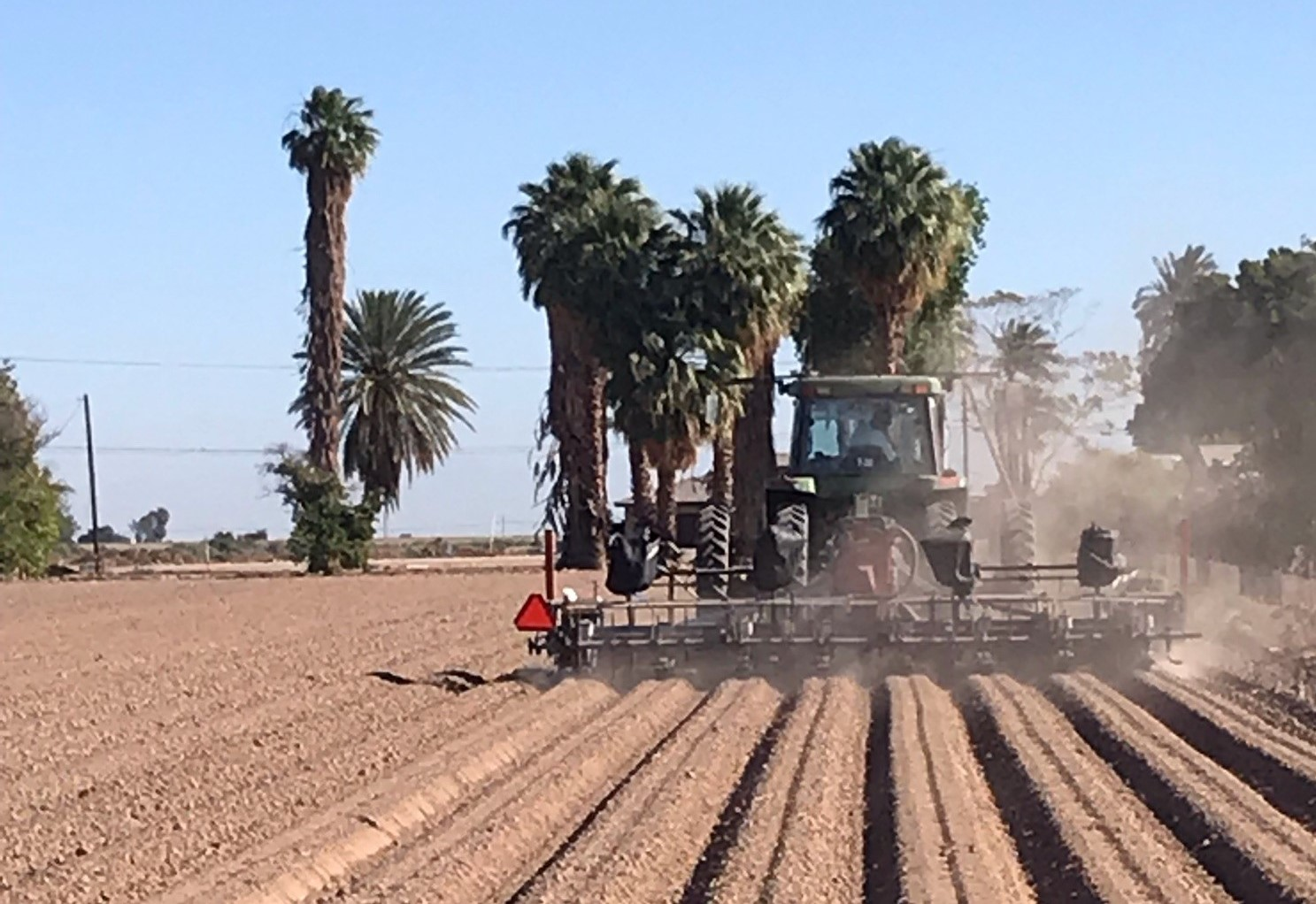 California hemp industry in 'complete chaos' as THC takes