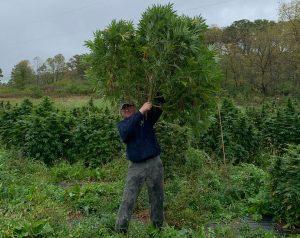 hemp farming licenses, Hemp boom: States report dramatic licensing increases for 2019