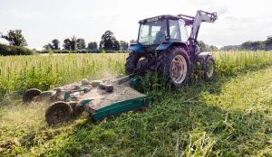 uk hemp destroyed, One of UK's largest hemp farms forced to destroy crop amid policy changes