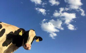hemp animal feed, Hemp for animal feed: Economic potential waits out legal maneuvering