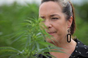 , Plant researchers discuss breeding priorities for stable hemp genetics