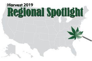 Southeast hemp harvest, Southeast harvest preview: 98% of North Carolina and Virginia farmers planted hemp for CBD production