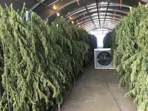 USDA hemp rules, White House approves USDA hemp rules; release imminent