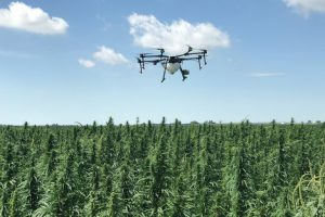 Irish hemp drone