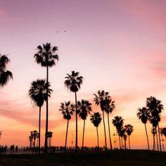 hemp California