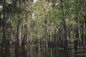 louisiana hemp program, Louisiana begins licensing farmers, CBD firms to build state's nascent hemp industry