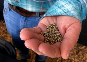 , Know before you grow: How to access certified hemp varieties
