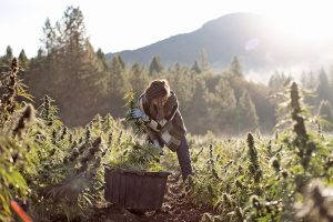 East Fork Cultivars, Oregon hemp producer leverages partnerships, retail presence to get national exposure, expand its footprint