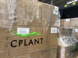 , Uruguay hemp seller ships half ton of low-THC flower to Switzerland via Germany