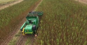 USDA hemp delay, Hemp farmers get last-minute delay on USDA compliance, but not everyone is happy