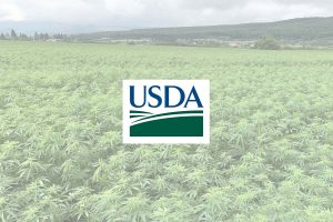 USDA hemp research, USDA grants $20 million for hemp research focused on sustainability, diversity and equity
