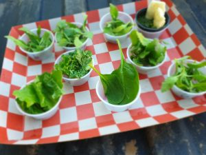 , Hemp baby greens may be the next salad superfood, researchers say