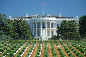 , Hemp in the Biden administration: Optimism and uncertainty