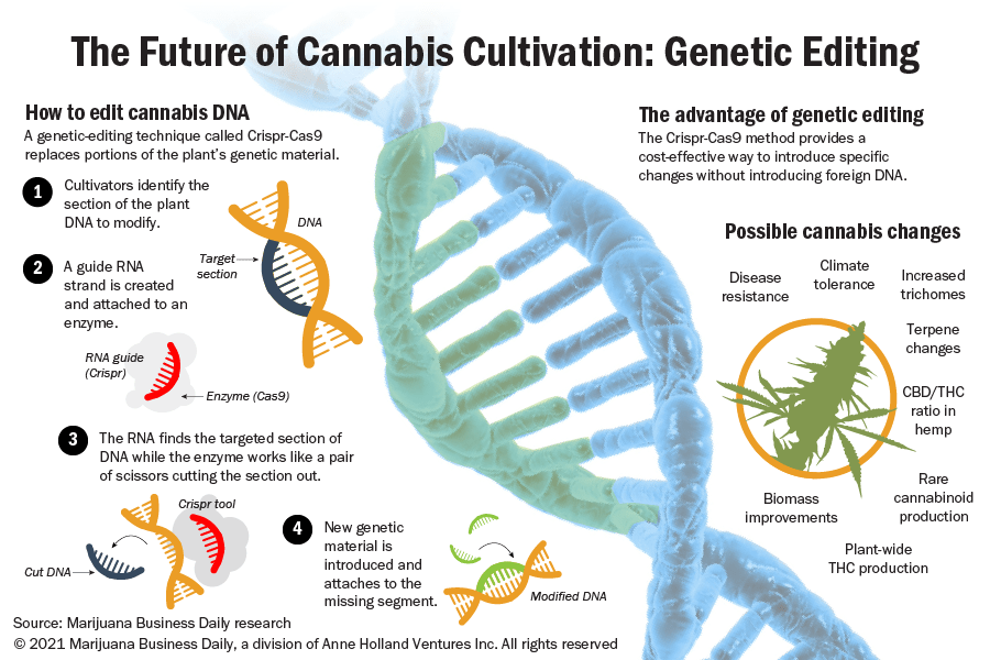 Illustration explaining how gene editing will be used to change the hemp and marijuana plant.