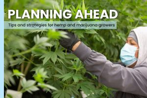 hemp cultivation tips