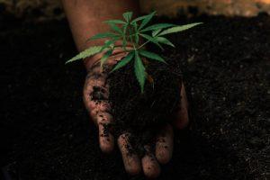 hemp and regenerative agriculture, Hemp could benefit from a pivot to regenerative agriculture, advocates say