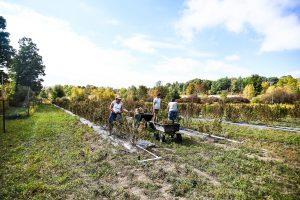 Hemp carbon farming