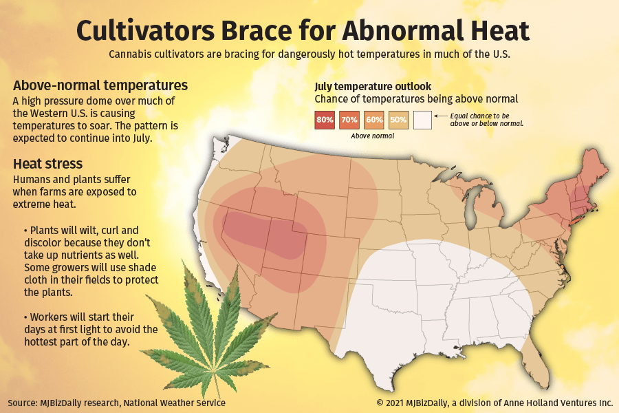 cannabis and extreme heat, How cannabis growers can manage unseasonably warm temperatures