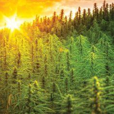 hemp carbon credits