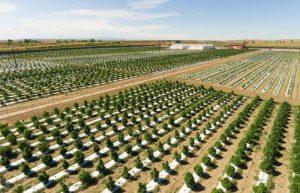 hempmarijuana cross-pollination, New Colorado law sets up pollen-drift review to minimize hemp, marijuana conflicts