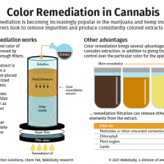 An infographic showing the process of color remediation used in the marijuana and hemp industries.