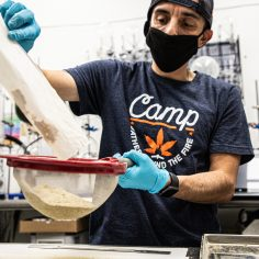 Cannabis extraction, Solventless cannabis extraction goes big with new technology, better breeding