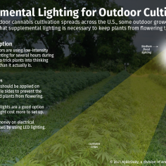 A graphic explaining using supplemental lighting techniques to keep cannabis plants from flowering too soon.