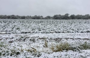 , How hemp growers can prepare for early season cold weather